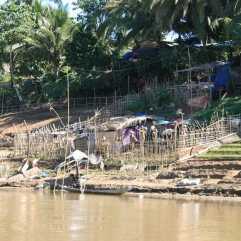 More farms along the Lao Mekong. Farming occurs during low tidal season usually around Christmas time.