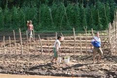 Farming along the Lao Mekong