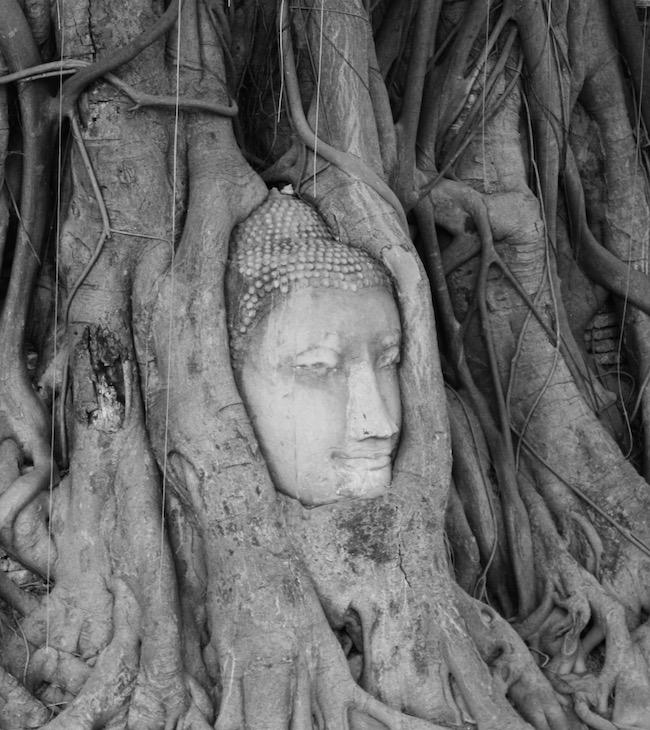 Bodhi Buddha