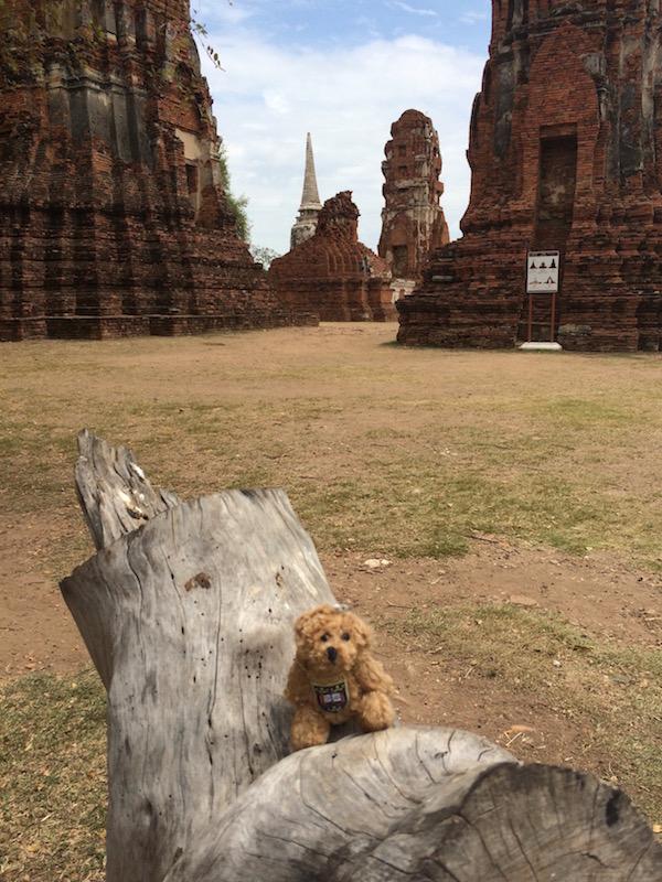 Oxford Bear Ayutthaya