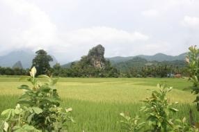 RicePaddy01