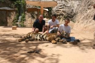 Tiger Time 01