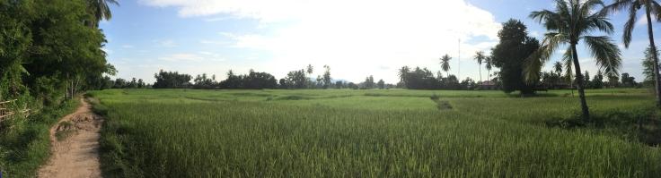 Rice paddies on Don Khone Island